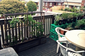 Balcony Garden Using Pallet
